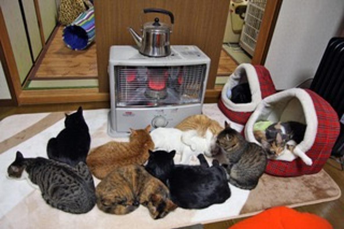 猫 の 多頭 飼い 多頭飼いに向いている猫はいる?多頭飼いするときの注意点もご紹介